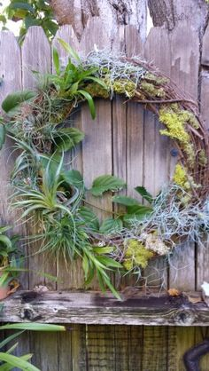Tillandsia (Airplants) & Orchid Wreath