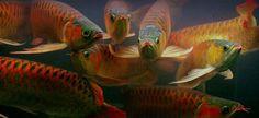 super red-- Dragon Fish, Sea Slug, Fish Art, Mosaic Patterns, Koi, Wildlife, Aquarius, Dragons, Animals