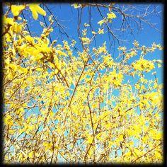 New England in Bloom. earmarksocial