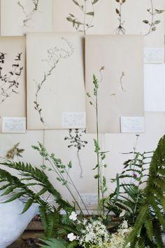 Hannah Lemholt Photography wall art, botanical prints, botanical drawings, design interiors, green, plants, hannah lemholt, flower drawings, garden