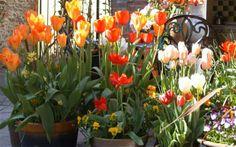 Kolorowe kwiaty ożywią każdy ogródek