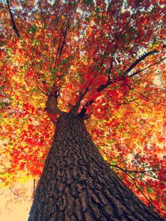 I want to be under this tree, staring a it's beautiful leaves~