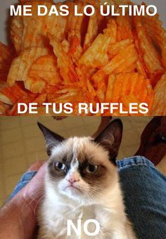 #Monchis #ruffles #cat #gato #No #Meme