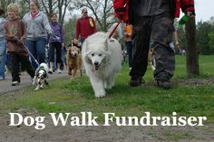 Dog Walk Fundraiser! Learn how to run one effectively!  (Photo by Andrew Ciscel / Flickr.com)