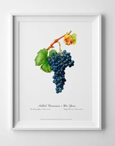 Grape vintage picture antique poster home wall art decor Home Wall Art, Wall Art Decor, Art Posters, Geometric Art, Vintage Pictures, Botanical Art, Picture Wall, Contemporary Art, Illustration Art