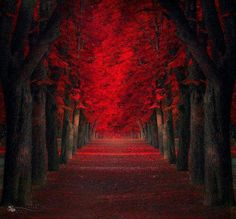 """Budapest-based photographer Ildiko Neer enjoys composing impressive natural environments retouched photos all together in the series called """"Dreamland"""". With beautiful colors, beautiful landscapes and enigmatic paths are discovered later in the article. Red Maple Tree, Red Tree, Beautiful World, Beautiful Places, Beautiful Pictures, Beautiful Beautiful, Absolutely Gorgeous, Tree Tunnel, Tree Photography"""