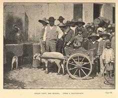 """Ponta Delgada - Ilha de São Miguel (1889). Fonte:https://www.facebook.com/HistoriaDosAcores- Ilustração retirada do livro """"A visit to the Azores with a chapter on Madeira""""."""