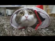"""Can t stop laughing   funny animal fails compilation 2015   cats annoying owners, cats being jerks - http://positivelifemagazine.com/can-t-stop-laughing-funny-animal-fails-compilation-2015-cats-annoying-owners-cats-being-jerks/ http://img.youtube.com/vi/64d6CxksoI0/0.jpg  ***Get your free domain and free site builder*** Click to Surprise me! Please follow and like us:  var addthis_config =   url: """""""",  title: """""""""""