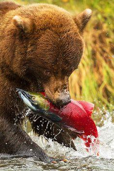 Badass salmon