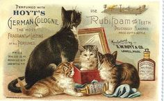Antique trade card for Hoyt's German Cologne (cats)