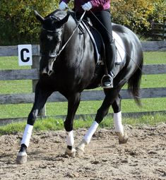 Pull. Any direction will do, really. Up, down, open rein, closed rein, back to the thigh… we can get creative about it.