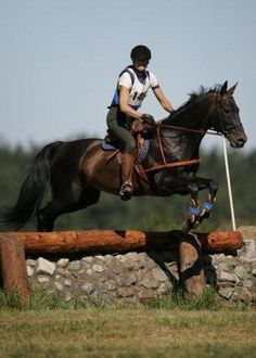 1995 Stallion Pan Tau (Perchat x Melusine) Peren Line. Owned by Sweet Water Farm.