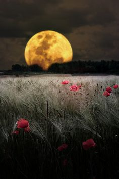 ♂ Dark, full moon, night, nature, flowers field