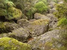 forest boulders - Google Search