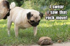 Funny Pug Dog Meme Puns                                                                                                                                                                                 More