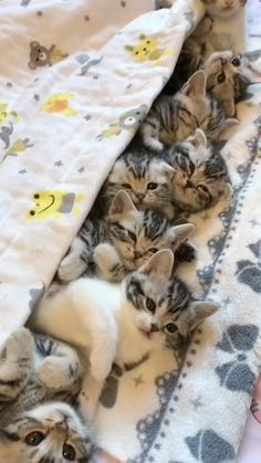 Funny Cute Cats, Cute Baby Cats, Cute Cat Gif, Cute Little Animals, Cute Cats And Kittens, Cute Funny Animals, Kittens Cutest, Cute Cat Video, Baby Animals Pictures