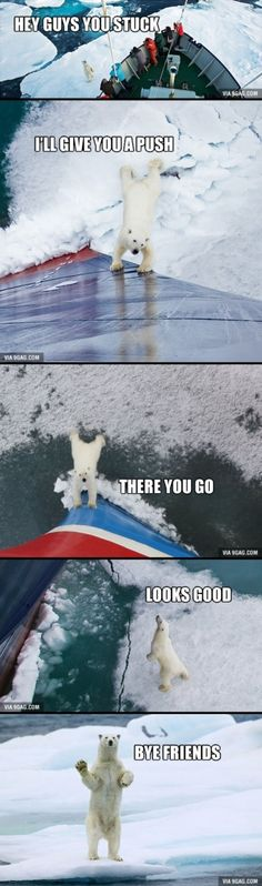 Funny pictures about Good guy polar bear. Oh, and cool pics about Good guy polar bear. Also, Good guy polar bear. Funny Animal Memes, Cute Funny Animals, Funny Animal Pictures, Cute Baby Animals, Funny Cute, Animals And Pets, Funny Memes, Funniest Memes, Animal Quotes