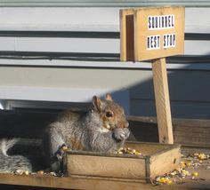 Squirrel rest stop. :]