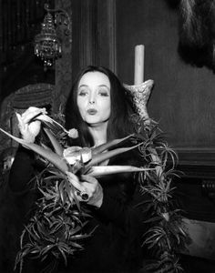 awesome 50 Years Since The Addams Family Premieres On US TV