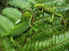 Related image Reptiles And Amphibians, Mammals, Nature Animals, Animals And Pets, Forest Park, Blue Band, Natural Wonders, Nature Photos, Mother Nature