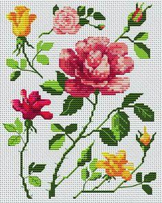 Everlasting_roses-28491.jpg 280×350 Pixel
