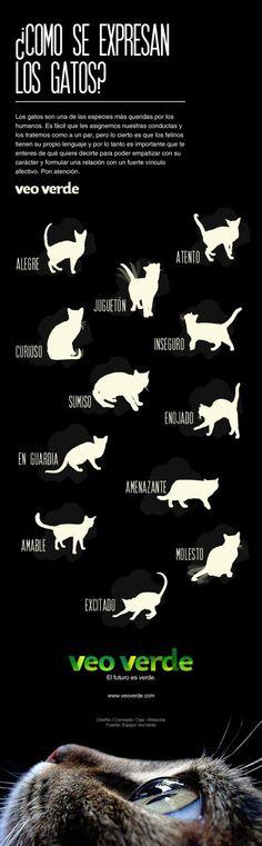 Cómo se expresan los gatos #mascotas #infografia #pet #infographic