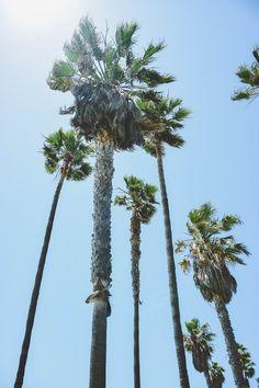 poems is under construction Venice Beach, Poems, California, Poetry, Verses, Poem