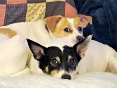 My dogs Stewie and Bandit. Cindy, Columbus, OH - 8/4/2015