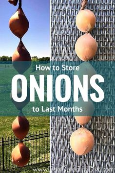 Love onions but not enough to buy them weekly? See this top trick to making onions last for months!