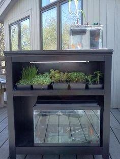 Mini-aquaponic display system
