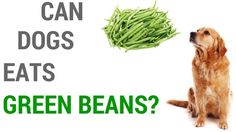 There are many varieties of beans so in this article I will discuss about can dogs eat beans? Are beans good for dogs? You can give them cooked beans. Can Dogs Eat, Dog Eating, Green Beans, Canning, Home Canning, Conservation