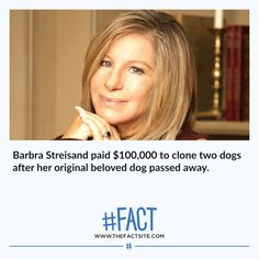 Funny Facts, Weird Facts, Dog Passed Away, Michael Crichton, Facts You Didnt Know, Daily Facts, Barbra Streisand, Animal Facts, Two Dogs
