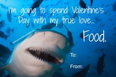#Sharklove