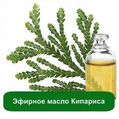Эфирное масло Кипариса, 5 мл