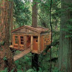 classique cabane dans les arbres