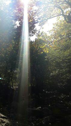 Ik vind deze afbeelding bij het begrip ''lichtrichting'' passen, omdat het licht van de zon in een richting valt.