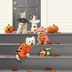 Dog Halloween costumes - too cute!