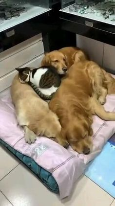 Cute Baby Dogs, Cute Funny Dogs, Cute Funny Animals, Cute Puppies, Cute Cats, Cute Dogs And Cats, Cute Animal Videos, Cute Animal Pictures, Cute Little Animals