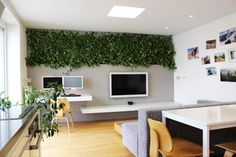 Living wall. Easy Pothos plant . The plants get light from the nearby window and grow in hydroponic inserts (pots filled with clay granules), relinquishing the need for soil. That means no dirt and no insects to deal with. Apart from occasional watering and directing their growth, the plants require little maintenance.