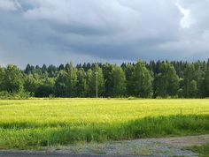 a field in late summer