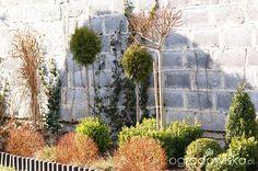 Atelier Ogrodowe... - strona 54 - Forum ogrodnicze - Ogrodowisko