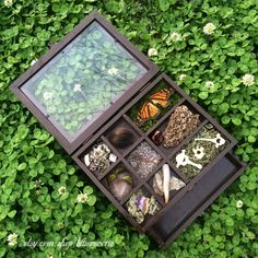 https://www.etsy.com/shop/bluereverie I've stained this 10 X 8 X 3.25 tabletop curio a dark color and filled it with many curiosities! There is a drawer too, about an inch deep, that I've left for you to fill with your own treasures. Included in the box: dried lichen, a beaver tooth, a fossilized stingray mouthplate, a piece of raccoon tail, 3 peacock feathers, a bed of lavender, a preserved European starling foot, some interesting moss, an amethyst crystal, a piece of bark, an antler, some…