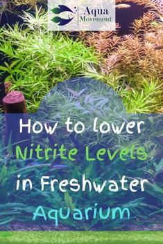 Nitrites are invisible but they have a huge negative impact on the health of your fish in an aquarium. If you want to learn more about nitrites read here. How to Lower Nitrite Levels in Freshwater Aquarium Aquariadise aquariadise Best Aquarium Tips Betta Aquarium, Aquarium Setup, Diy Aquarium, Freshwater Aquarium Fish, Aquarium Design, Planted Aquarium, Betta Fish, Aquarium Ideas, Fish Aquarium Decorations