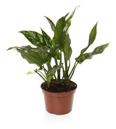 The Best Place for Indoor Plants