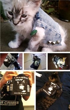 Punk rock kitties  \m/  Making one of these jackets for my kitty!!!<3
