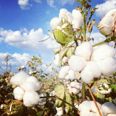 At Verlaine & Rimbaud we only use 100% organic cotton  Change the way you do Fashion and save the World  www.verlaine-et-rimbaud.com  #organiccotton #organic #biologic  #bio #savetheworld #unfucktheworld #ecology #green