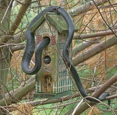 Snake In Bird House