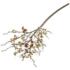 Crate & Barrel Yellow Berry Stem Artificial Branch (27 CAD) ❤ liked on Polyvore featuring home, home decor, floral decor, fillers, flowers, plants, autumn, decor, flower stem and fall home decor