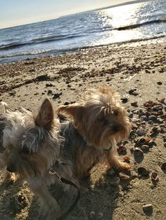 Winter beach day with Gismo and Boo