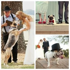 Pets in Weddings / Weddings Have Gone to the Dogs on http://itsabrideslife.com